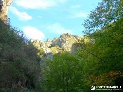 Hayedos Parque Natural de Redes;excursiones de un día madrid excursiones de un día clubes de sende